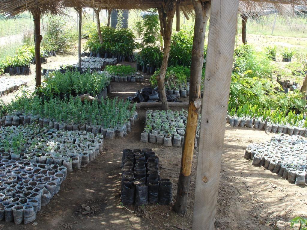 boomkwekerij sirigu